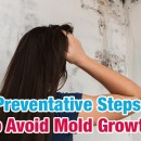 Preventative Steps to Avoid Mold Growth